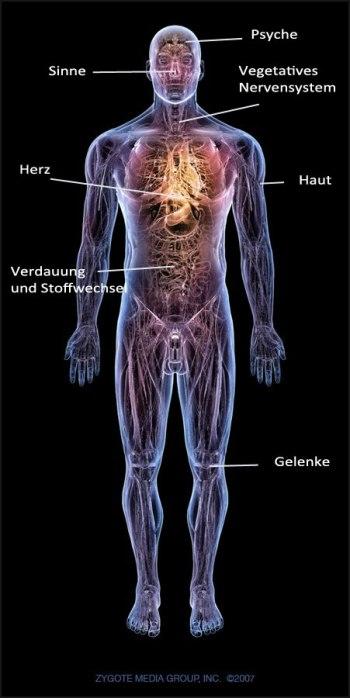 Fasten-Anatomy